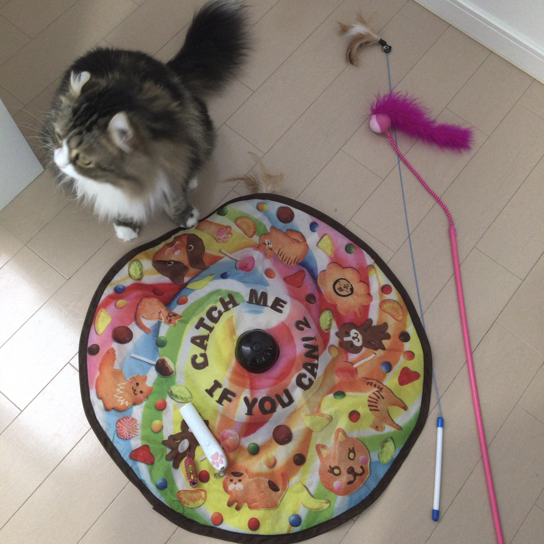 猫用おもちゃおすすめランキング
